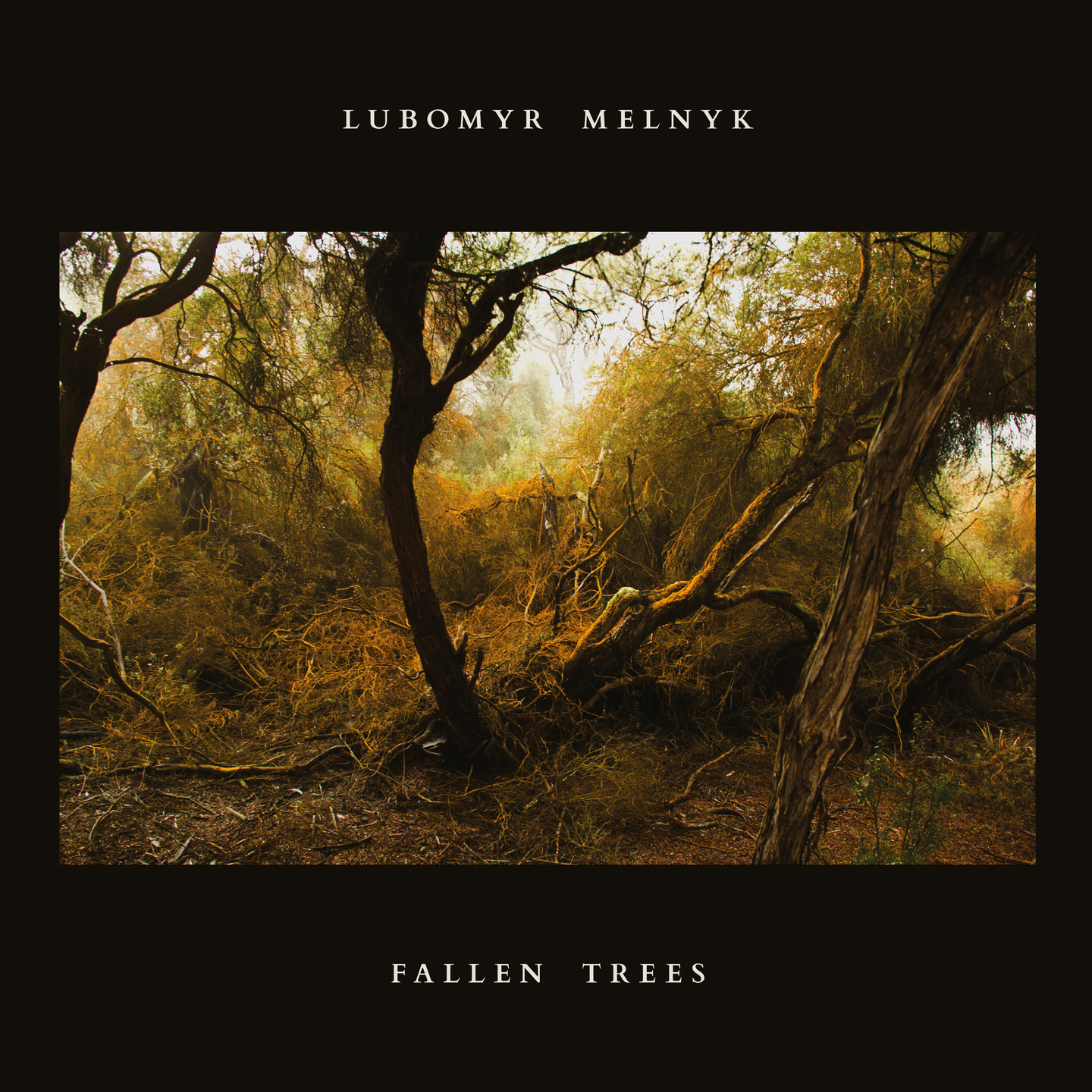 Lubomyr Melnyk s  Fallen Trees  Is a Thing of Uncommon Beauty