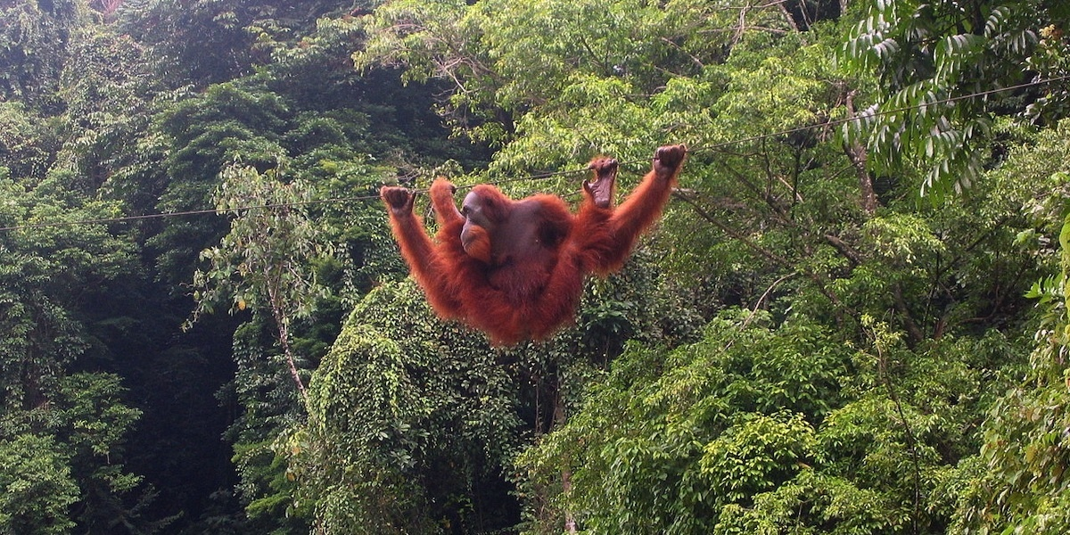 photo of Norway to Ban Deforestation-Linked Palm Oil Biofuels in Historic Vote image