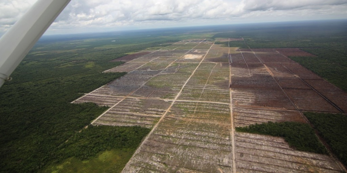 World s Largest Palm Oil Trader Ramps Up Zero-Deforestation Efforts