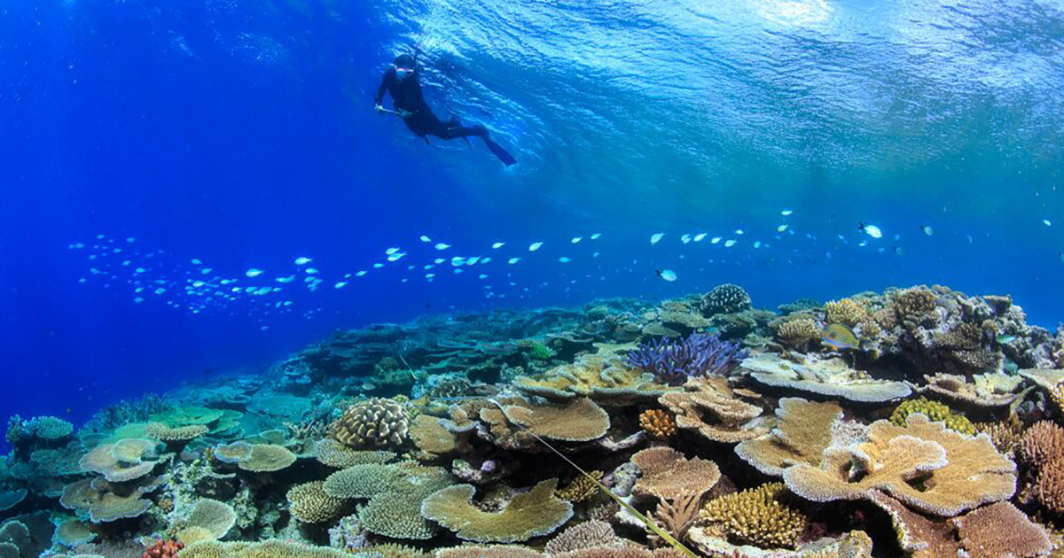 Great Barrier Reefs Resist Back-to-Back Bleaching Events Through