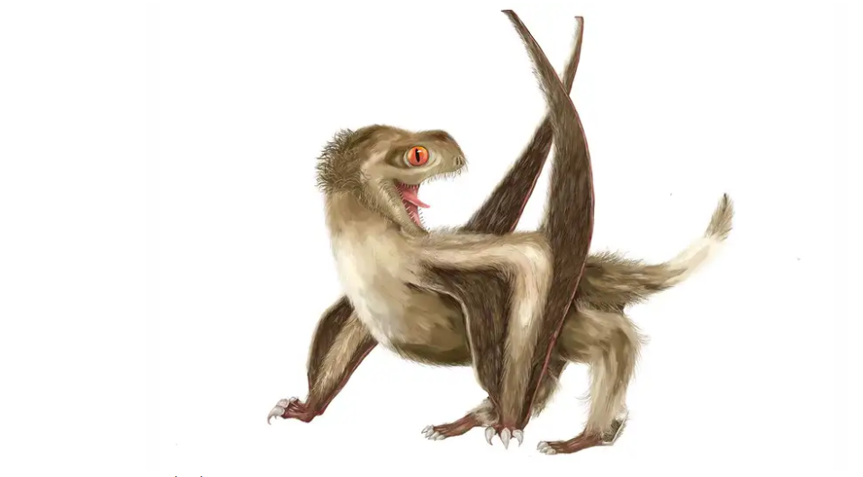 Fossils show ancient flying reptiles called pterosaurs likely had feathers