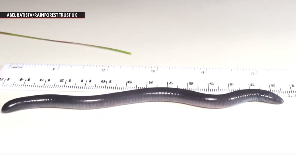 Blind, Burrowing, Thin-Skinned Worm Named After Climate-Denier Trump