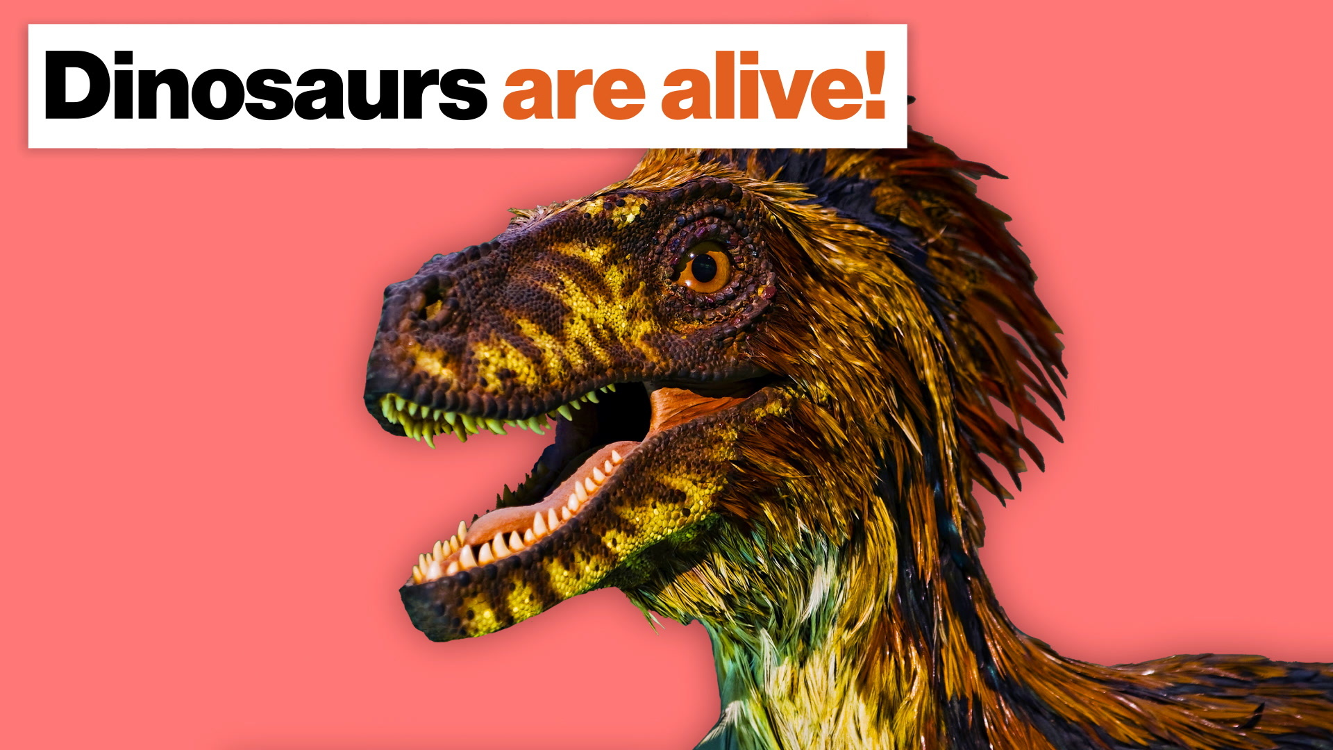 Dinosaurs are alive! Here's how we know, and why it matters