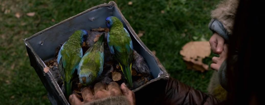 5 Theories On Netflix S Bird Box And Its Interpretation Of Mental