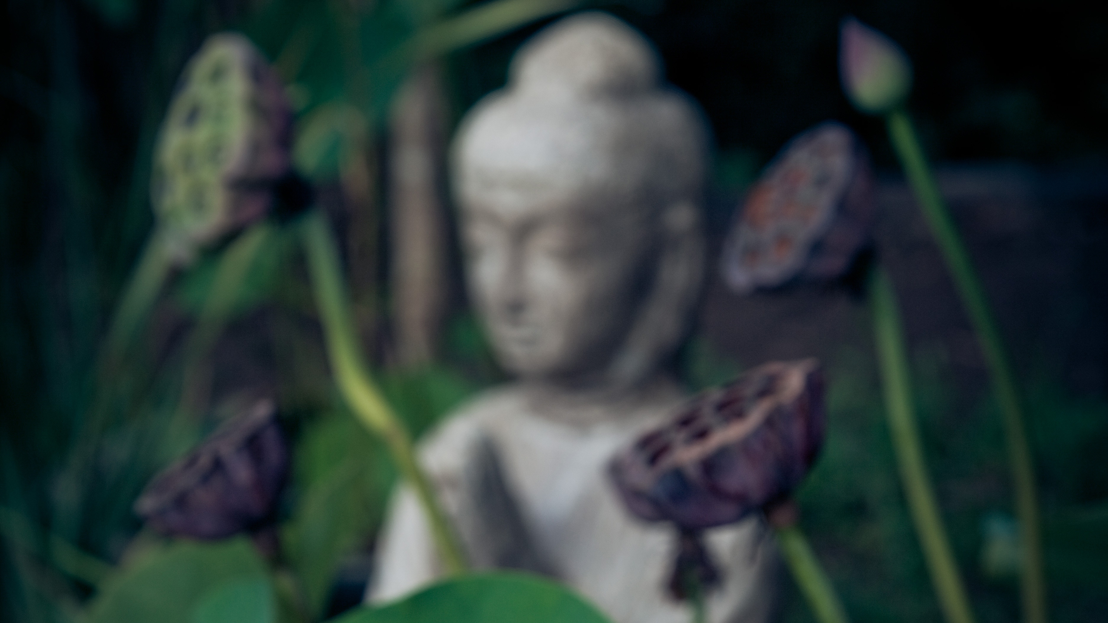 10 Buddhist koans, and why understanding them is pointless