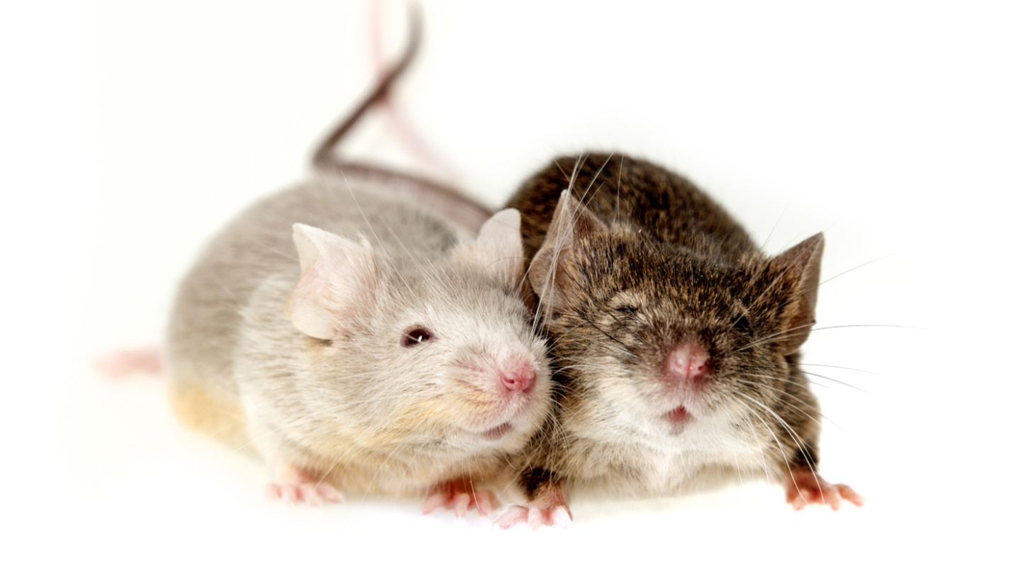 Want to know what mice in labs are saying? Try DeepSqueak.