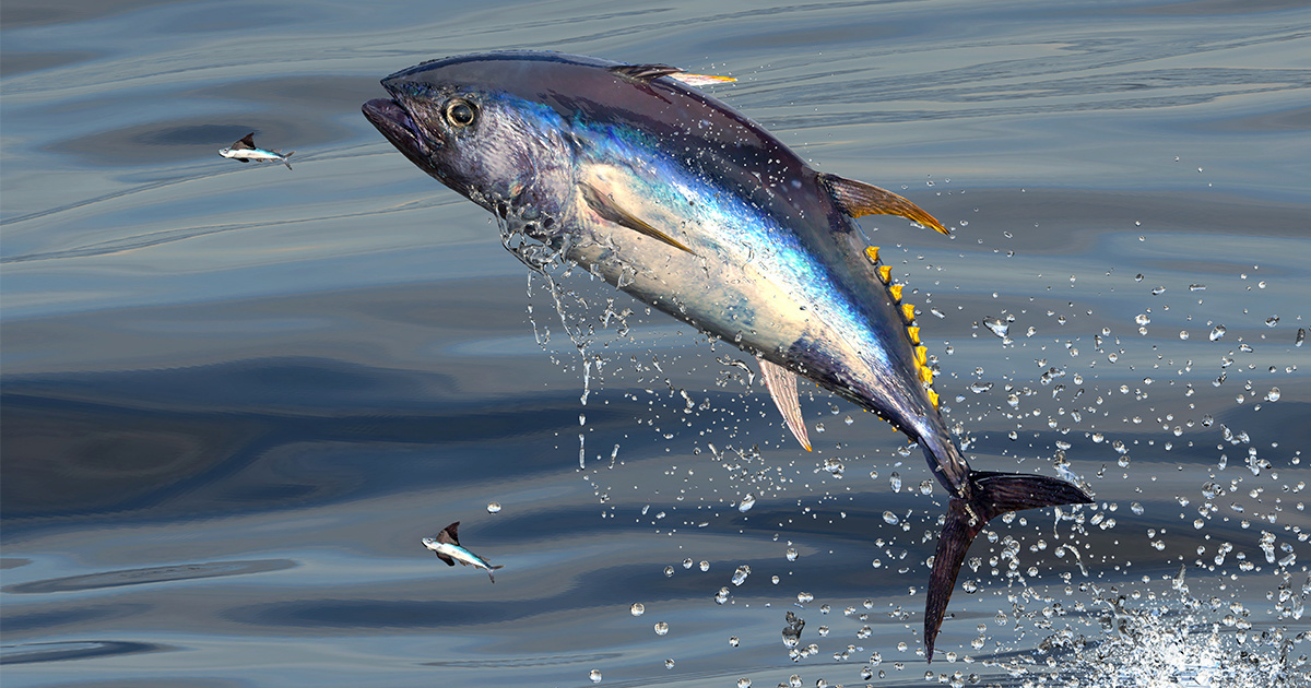 photo of EcoWatch Exclusive: Ocean Conservation Expert Carl Safina on the Tuna That Sold for $3 Million image