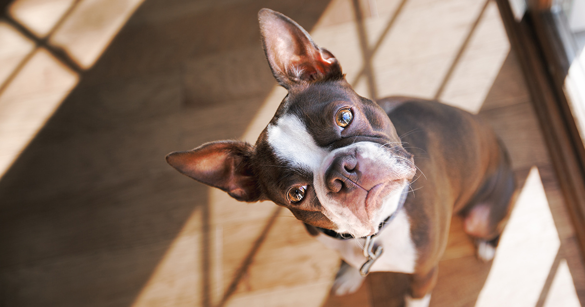 photo of 5 Ways to Be an Eco-Friendly Pet Owner image