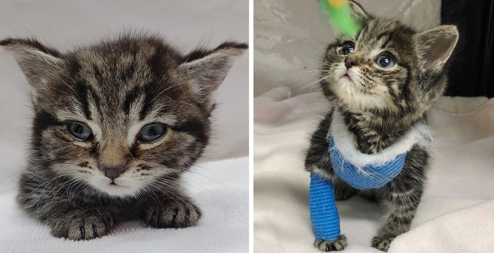 Kitten Found Freezing in Park, Brought Back from the Brink and Gets Life-saving Surgery
