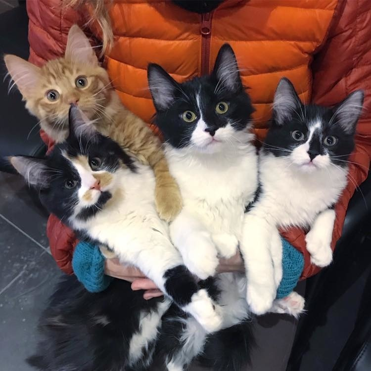 Stray Cat Walks Up to Couple, Looking for Safe Place for Her Kittens