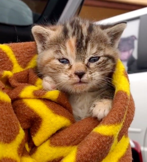Kitten Rescued from Streets, Meows for Cuddles When Someone Comes to Help Her