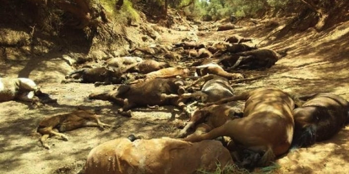 'Horrific Mass Grave' of Wild Horses Found in Australia Amid Extreme Heat