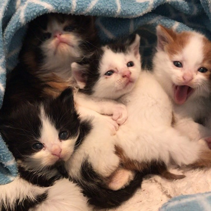 Kittens Found Huddled Up in Trash Bin, Kept Each Other Safe Until Help Arrived