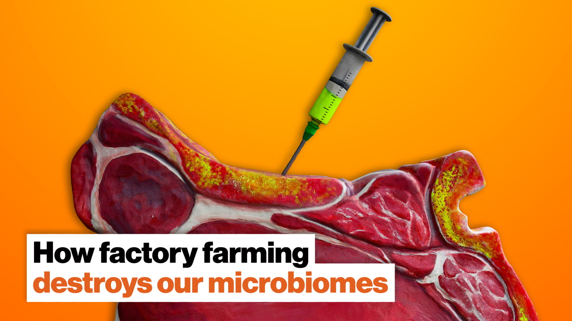 How antibiotics used in factory farming destroy our microbiomes