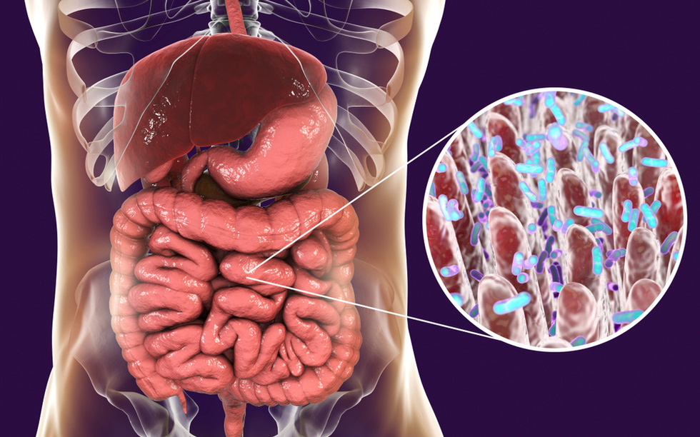 Microbiome in our guts