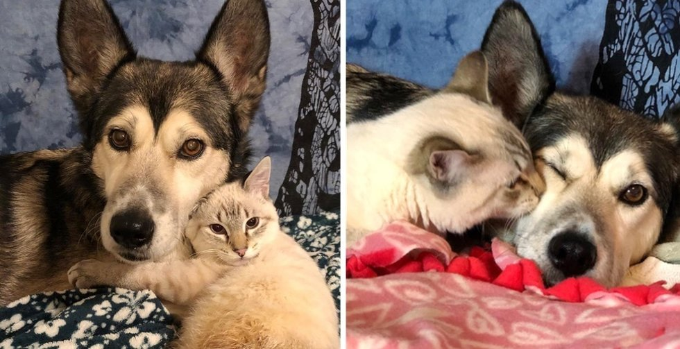 Kitten Who Can't Stroll, Finds Particular Foster Mother to Assist Flip His Life Round