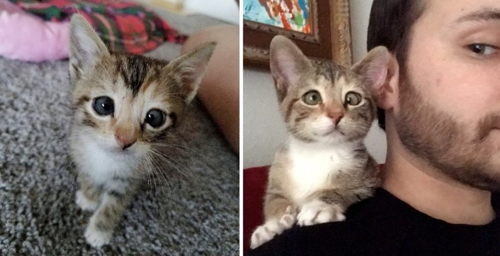 Man Adopts Kitten Who Couldn't Discover a House Due to Her Eye – He Is aware of She's Excellent