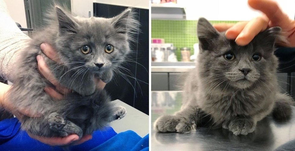 Kitten with Extra Toes Wandered to a Yard and Found Kindness When Neighbor Came to Help