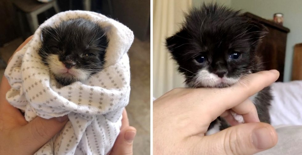 Kitten Discovered Crying Close to Drive-through on Stormy Day, Finds Love from One other Cat and Kitten