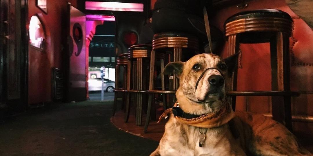 11 Quintessential Dive Bars in San Francisco