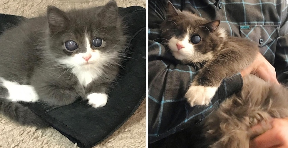 Girl Gave Particular Kitten a House When No One Else Did, and Turned His Life Round