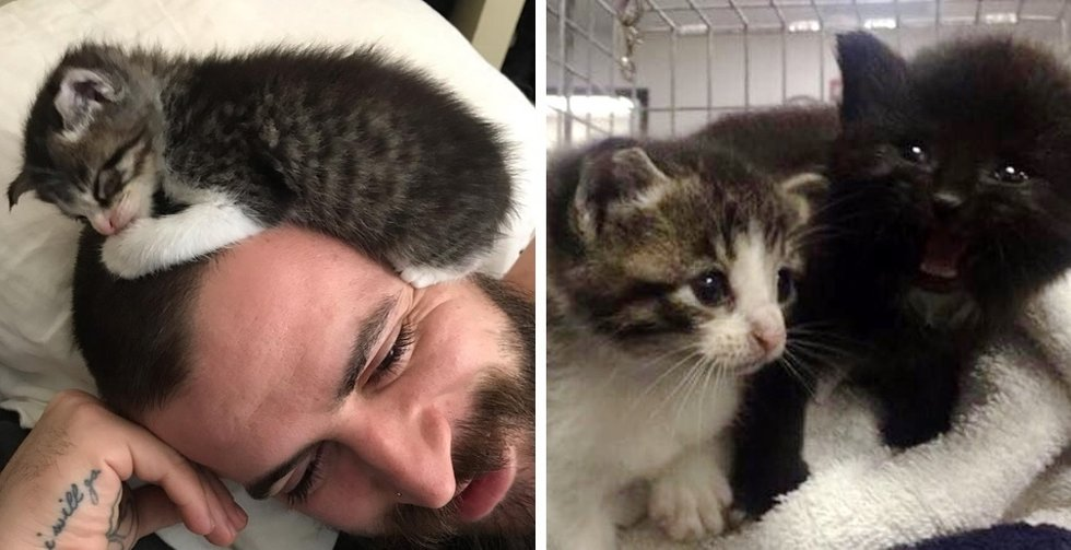 Stray Kittens Find Someone to Love After They Were Saved from Storm Drain