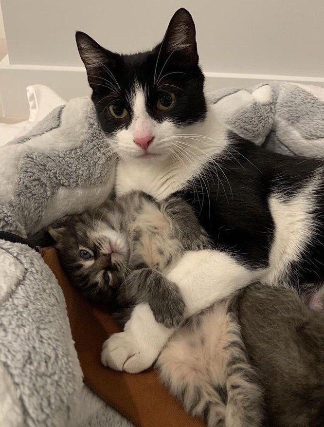 Mom Sneaks In Sons Bedroom: Stray Cat Sneaks Into Basement With Her Kittens And Finds