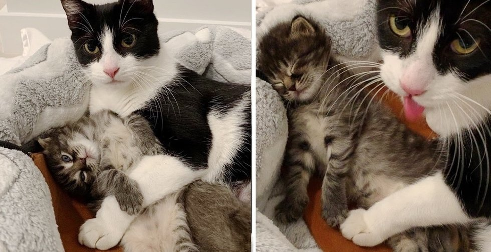Stray Cat Sneaks into Basement with Her Kittens and Finds Somebody to Assist Them