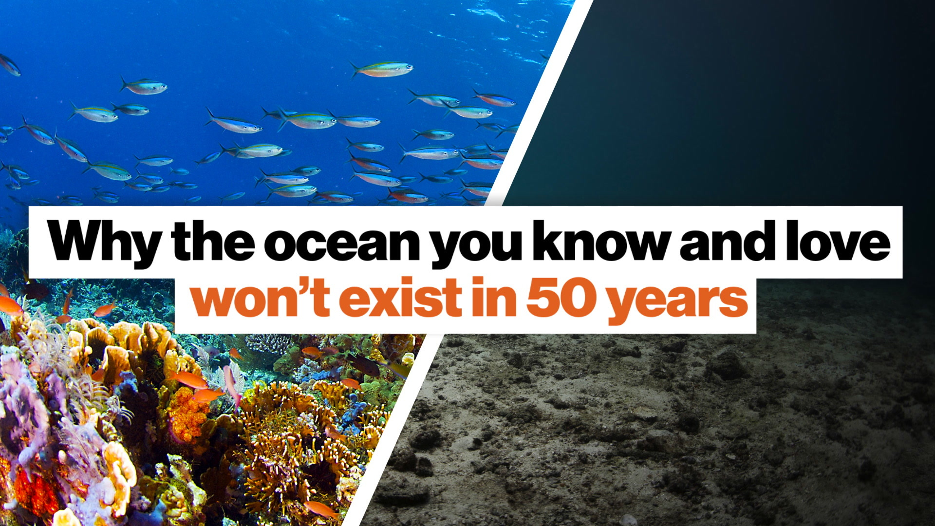 Why the ocean you know and love won't exist in 50 years