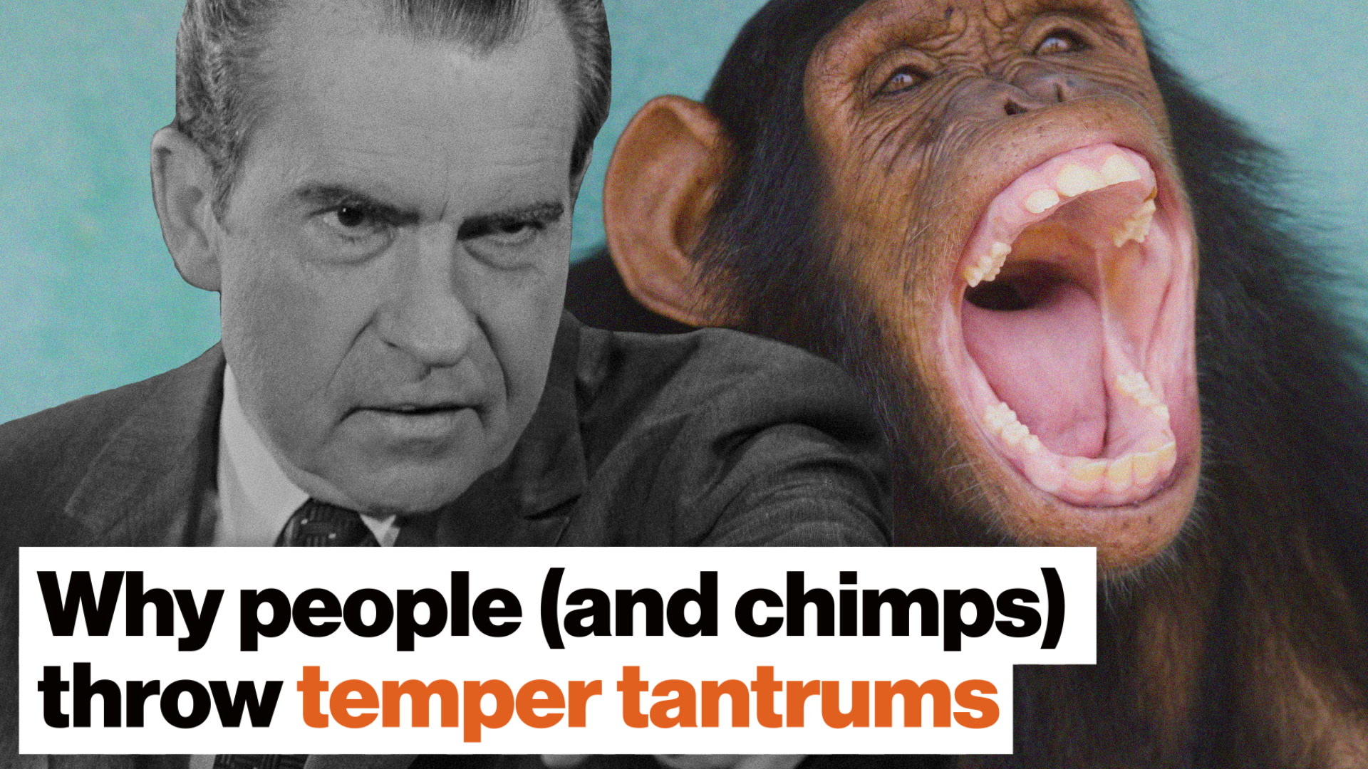 Why people (and chimps) throw temper tantrums