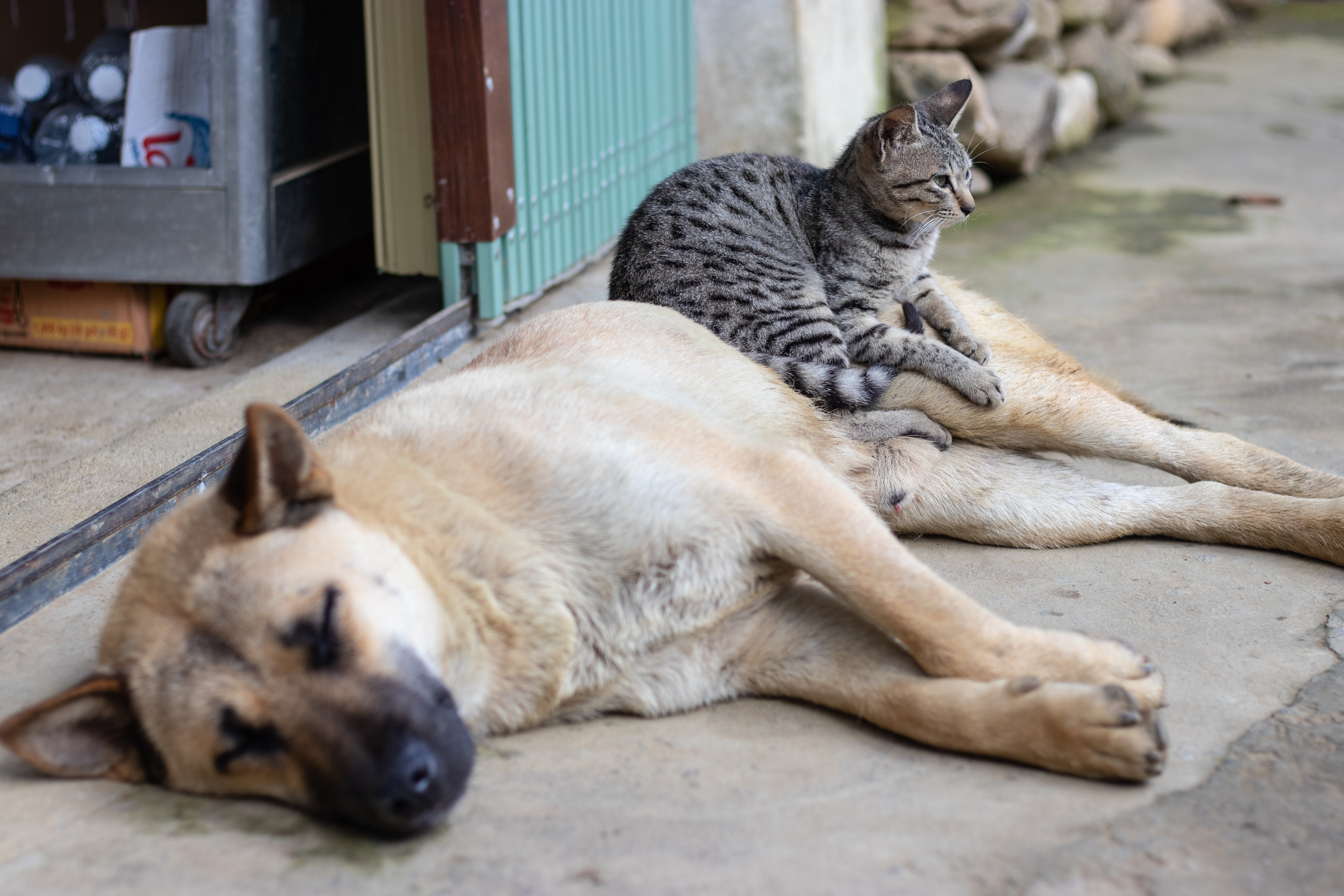 Why do people prefer dogs over cats? They re more controllable, study finds.