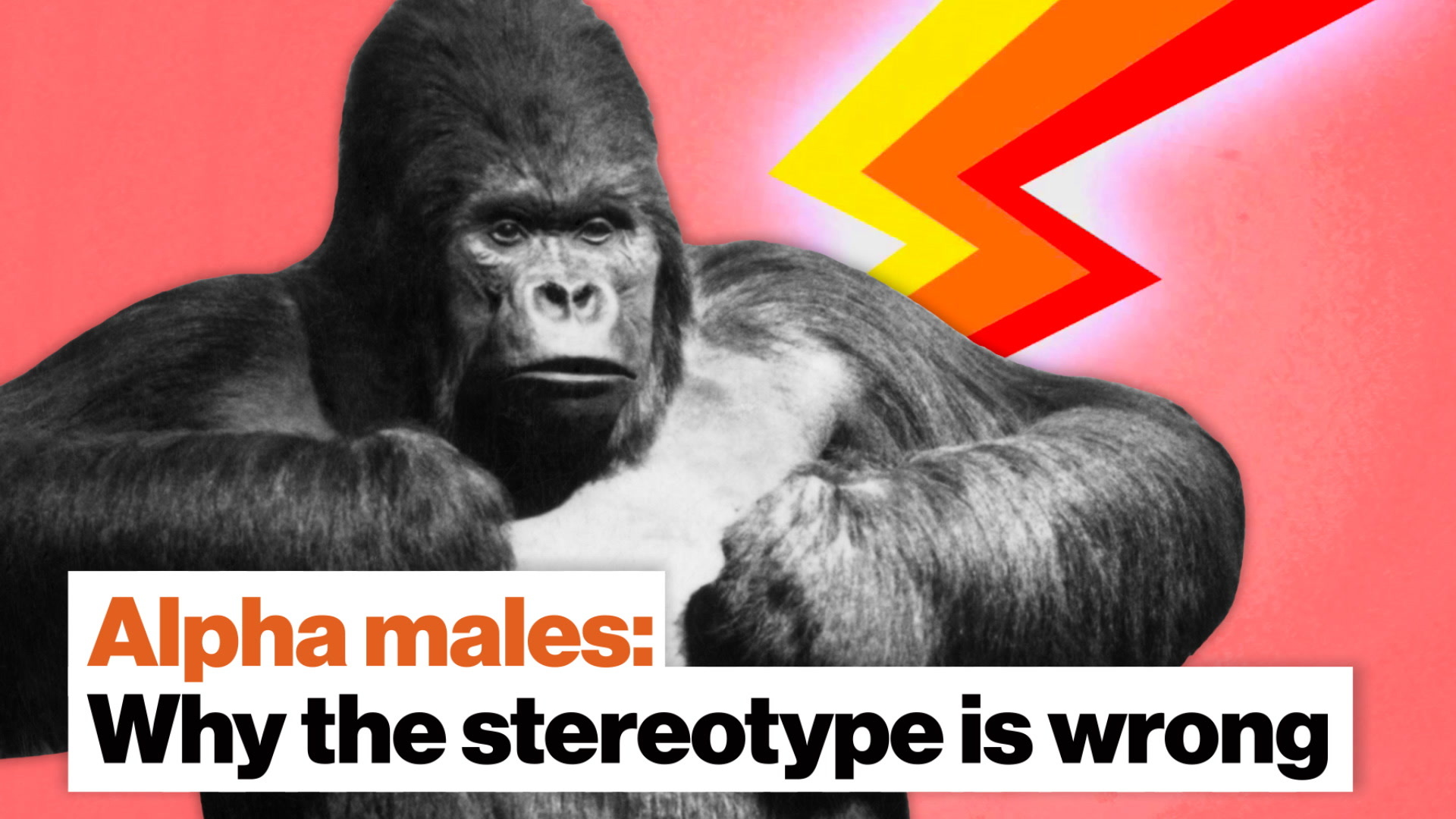 Why the  alpha male  stereotype is wrong