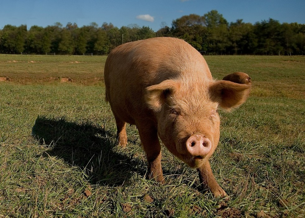 The 5 Worst States To Be A Farm Animal