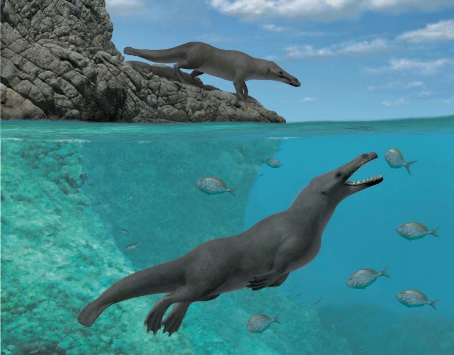 Remembering Peregocetus pacificus — modern whales  otter-like ancestor