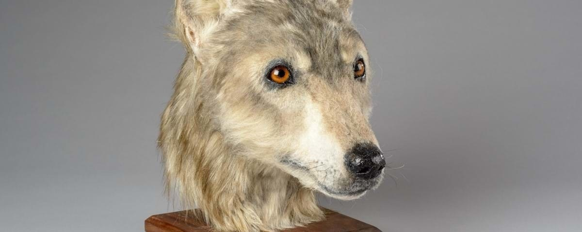 Behold, the face of a Neolithic dog