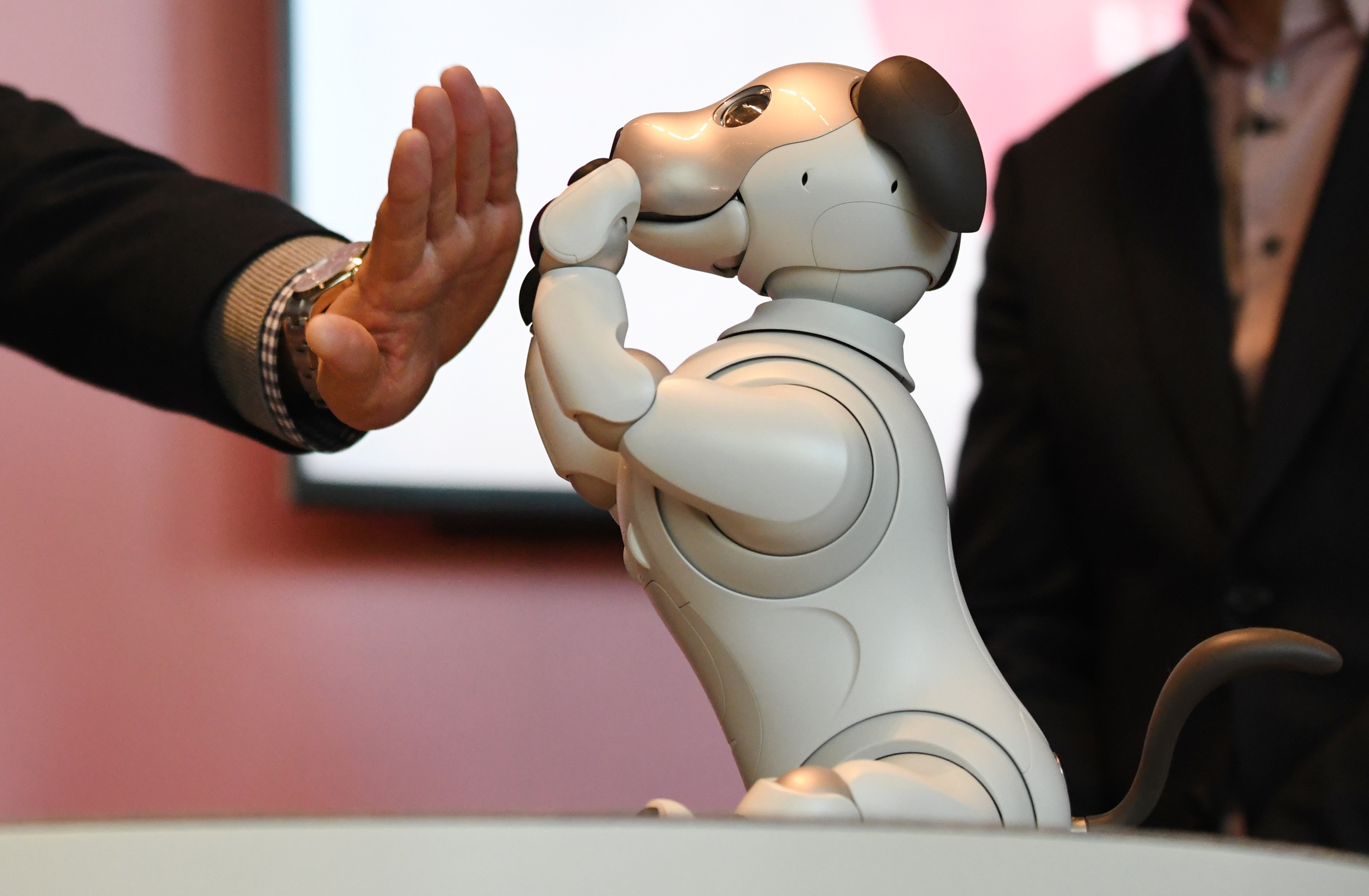 Why A.I. robotics should have the same ethical protections as animals