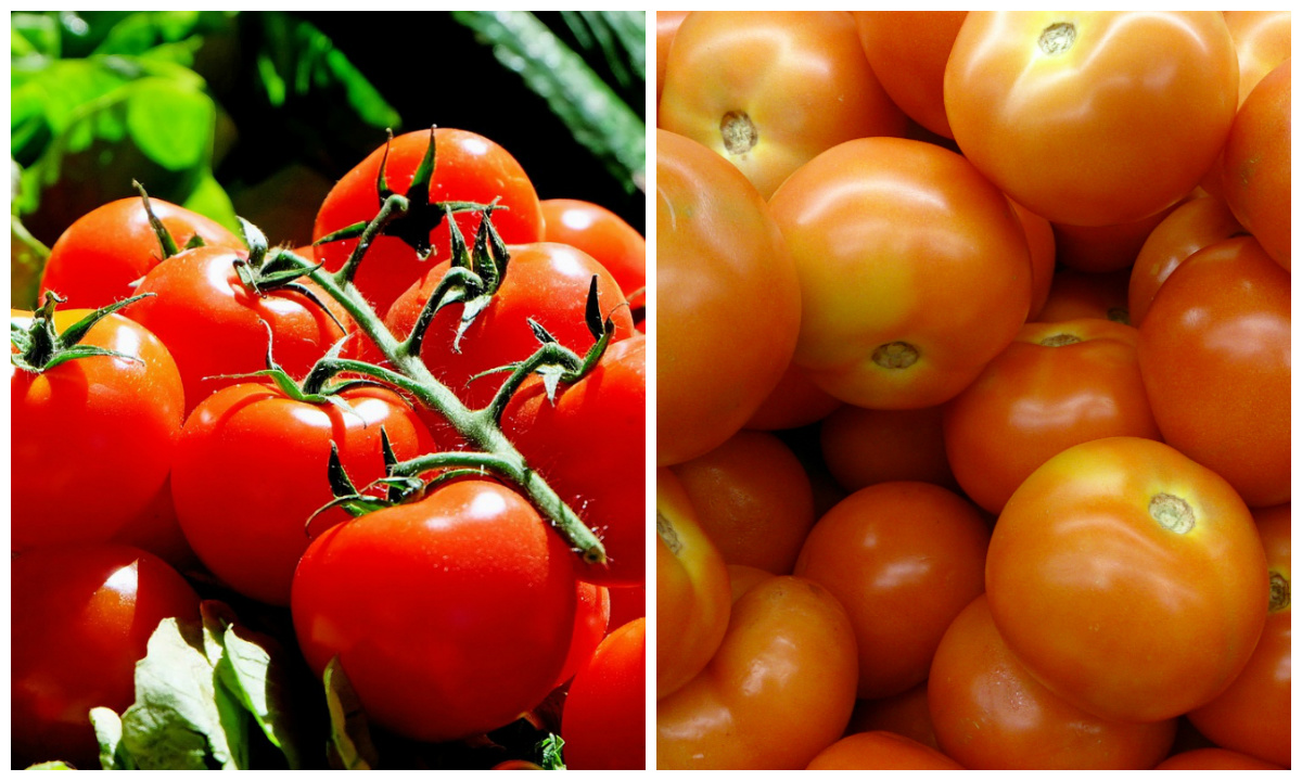 Scientists discover why supermarket tomatoes taste so bland