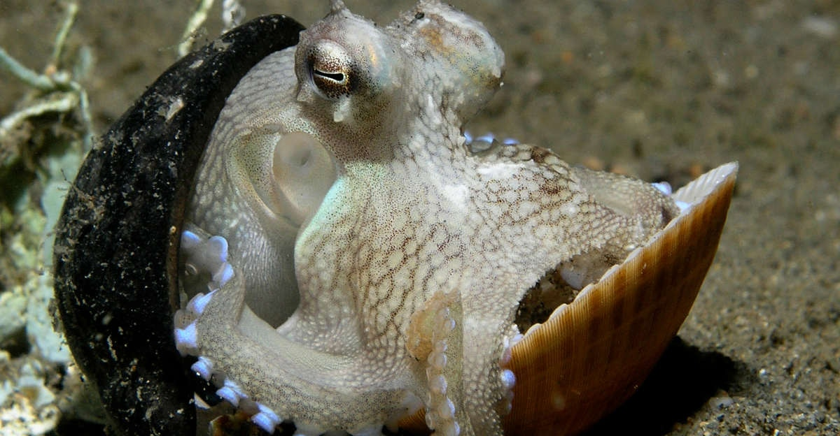 1. Octopuses* can bust out of their aquarium tanks and find their way back to the ocean.