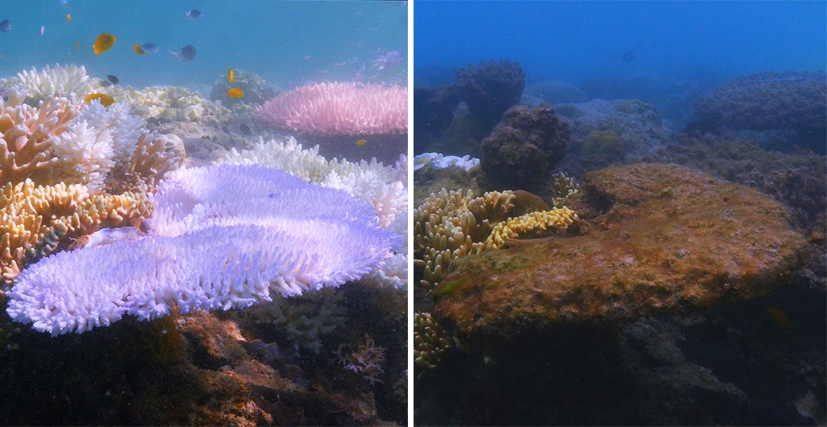 See Stunning Before And After Shots Of Coral Reefs As Ocean