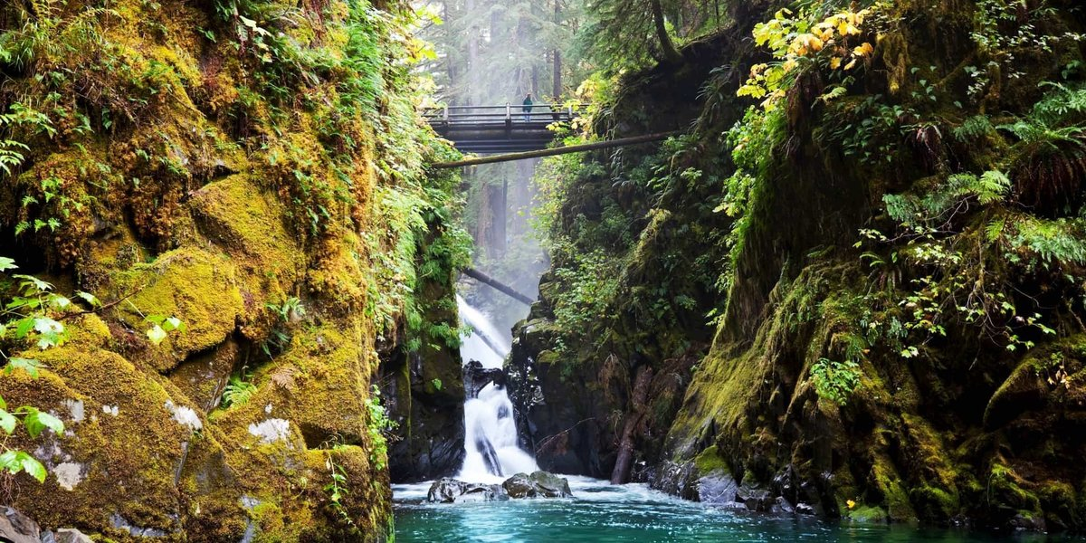 This Olympic National Park Rainforest is one of the quietest places on Earth