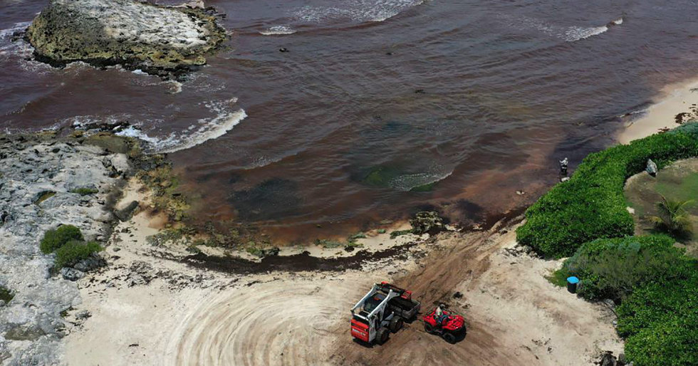 Biggest Ever Seaweed Bloom Stretches From Gulf of Mexico to Africa