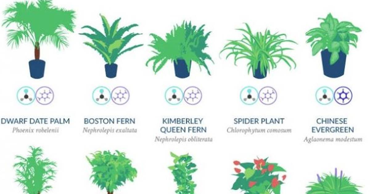 NASA says these 18 plants are the best at naturally ... Nasa S List Of House Plant on list of perennial plants, list of office plants, list of green plants, list of plant diseases, list of house materials, list of african violets, list of pvz 2 plants, list of toxic houseplants, list of bog plants, list types of plants, list of all plants, list of types of orchids, list of cacti, list of bedding plants, list of landscaping, list of mattresses, list of vines, list of water plants, list of common plants, list of garden plants,