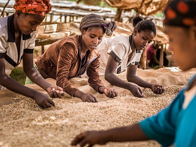 These 'Super Beans' Are Feeding The Hungry In Uganda