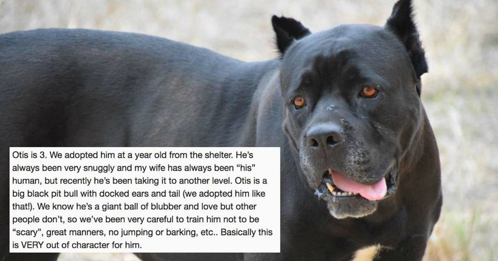 A guy asked why his dog had suddenly become so protective of his