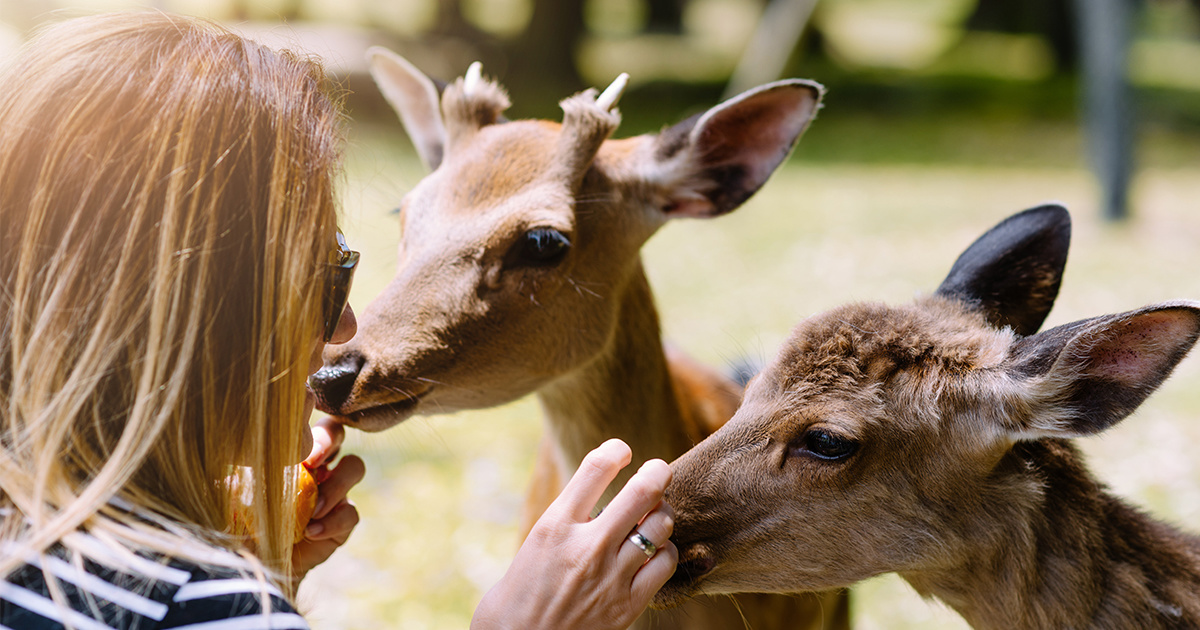9 Nara Deer Found Dead After Eating Plastic in Sacred Japanese Sanctuary