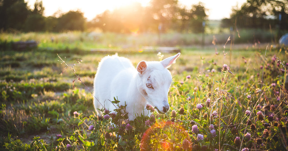 Is a Farm Stay With Rescue Animals Your Idea of Heaven?