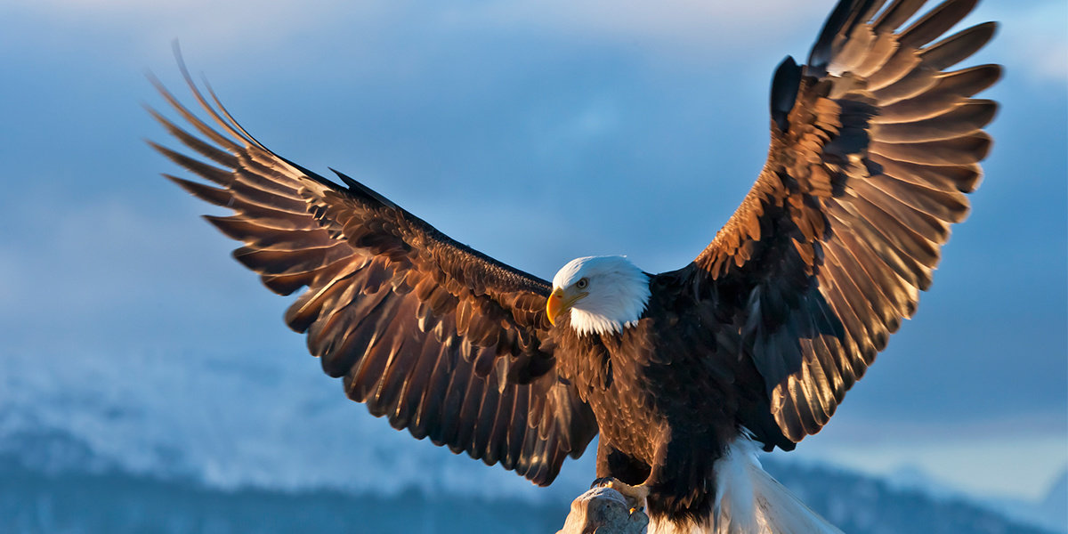 Trump Admin Guts Endangered Species Act in the Midst of Climate Crisis and Biodiversity Loss