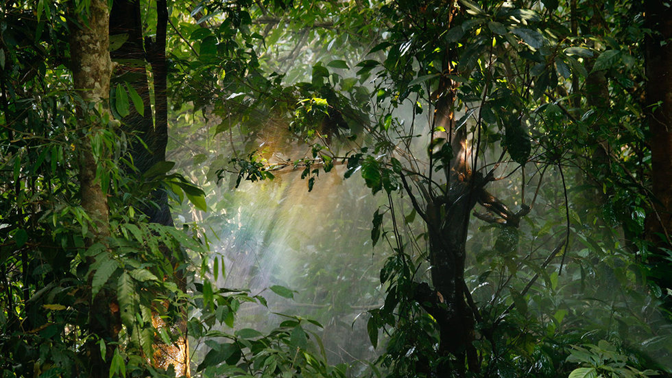 New Research Finds Plants Will Feast on Increased CO2, But Only Until 2100