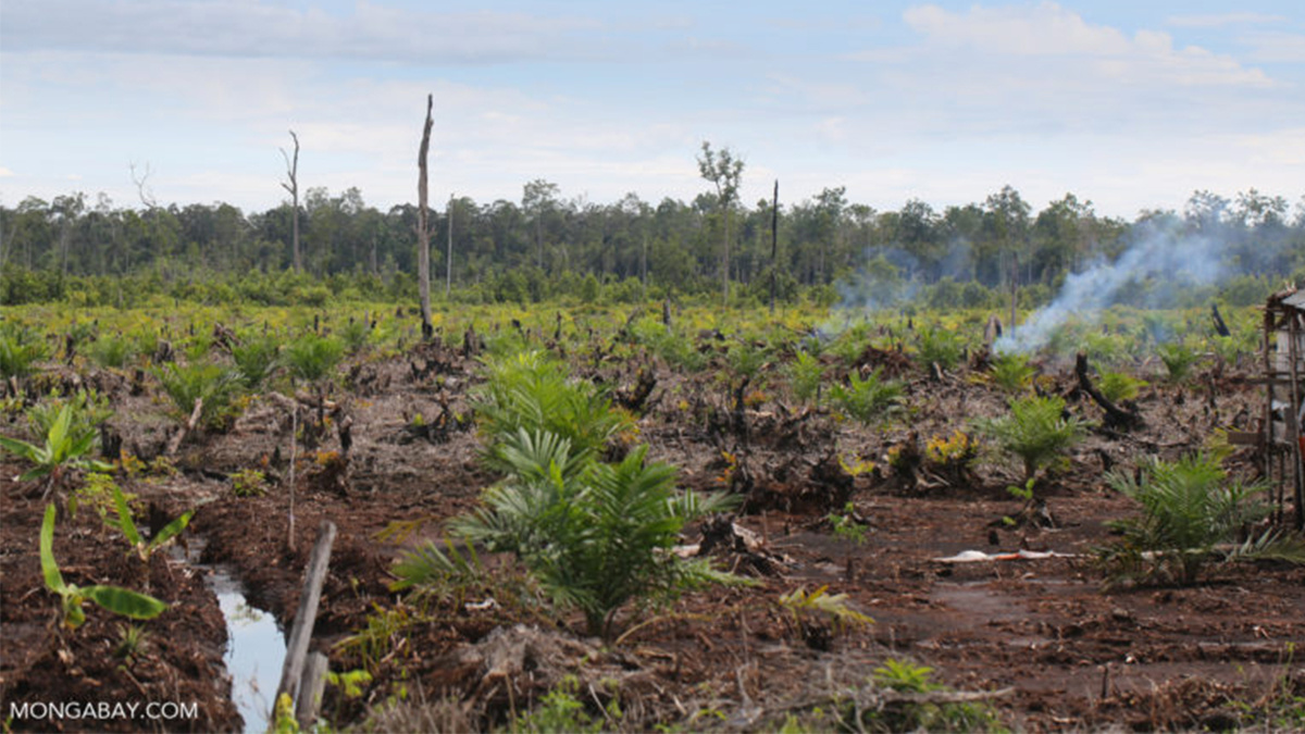 Indonesia Forest-Clearing Ban Criticized as Government Propaganda'