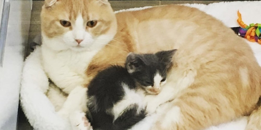 Kitten Found on Side of the Road, Didn't Thrive Until He Cuddled with Cat at Clinic
